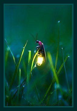 firefly single